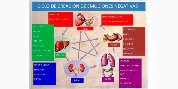 organos-emociones